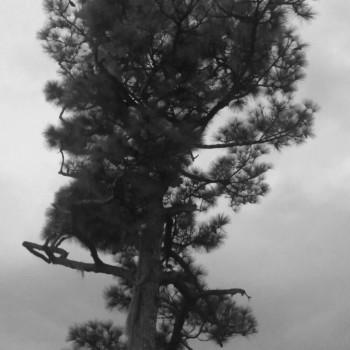 tree_03b